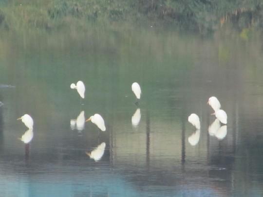 球磨川と白鷺