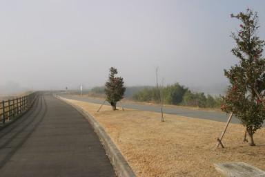 山茶花と霧とサイクリングロード