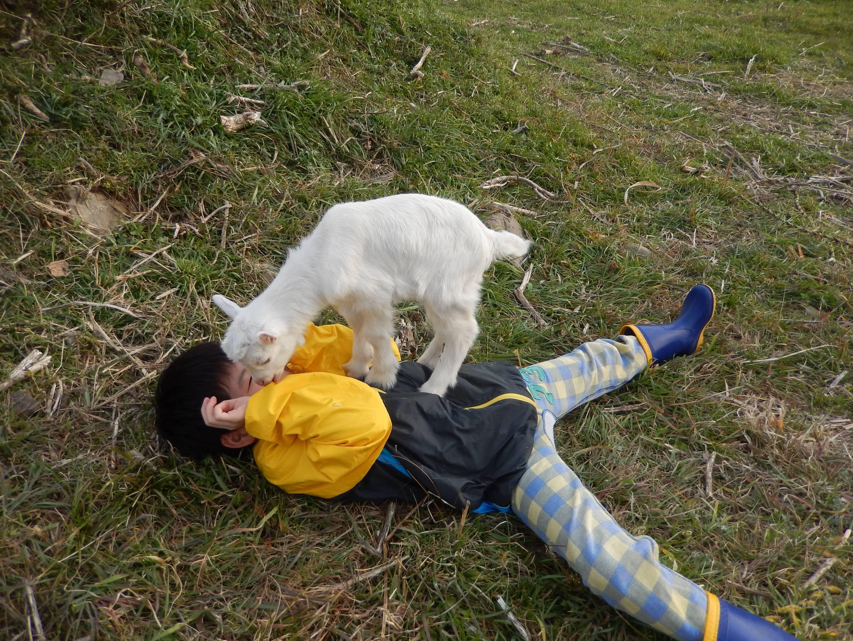 動物との触れ合い019s