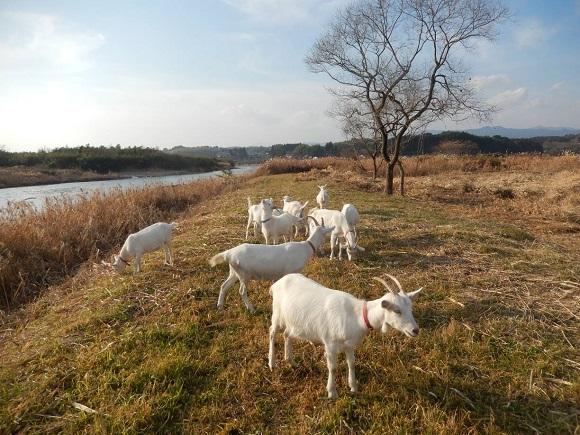 球磨川の水辺空間