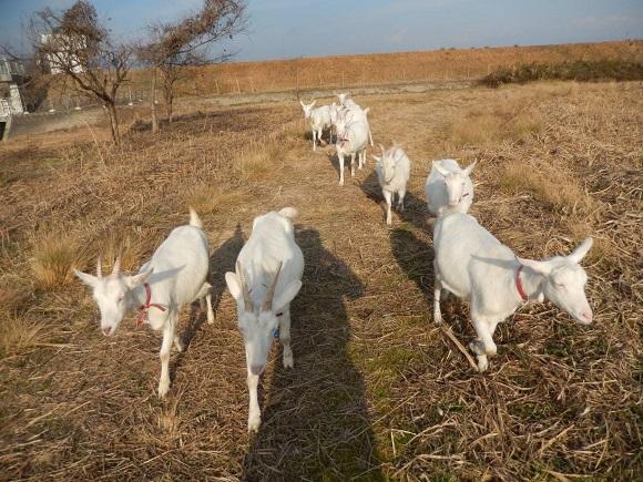 元旦、初日を浴びながら牧場内散歩